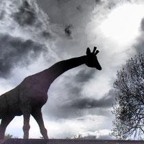 Girafe - Sculpture sur foin à Neuf-Brisach - Hauteur 6m