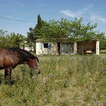 manchmal sind die Pferde nah am Haus