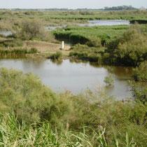 Sumpflandschft der Kleinen Camargue