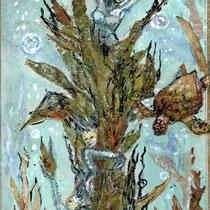 Alghe e Ninfe