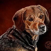 """""""Cali, beagle ariégeois""""   acrylique sur toile   38x46"""