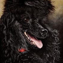 """""""Tiny Black Poodle""""   acrylique sur carton entoilé   24x33"""