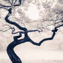 Die Alte im Wald