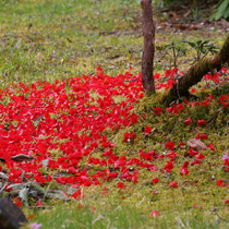 Crarae Gardens, Schottland