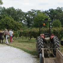 Côté vigne incentive vendanges à Gaillac