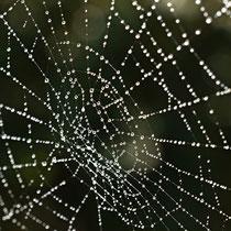 Netz der Kreuzspinne