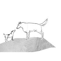 Begegnung Wolf Hund#Wolfshybriden