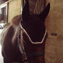 Bonnet noir, liseré marron, blanc, taille poney D (ref 15)