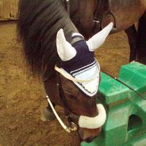 Bonnet bleu marine, bleu clair, blanc, taille cheval (ref 26)