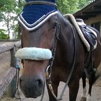 Bonnet bleu marine, liseré marron et blanc, taille cheval (ref 92)