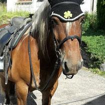 Bonnet noir, liseré vert pomme, ajout d'un motif trèfle en feutrine, taille cheval de trait (ref 117)