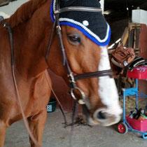 Bonnet noir, liseré bleu roi, taille cheval [grandes oreilles] (ref 94)