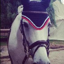 Bonnet noir, liseré rouge, blanc, taille cheval (ref 24)