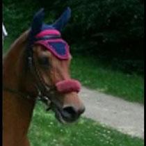 Bonnet bleu marine, liseré framboise, taille poney D (ref 9)
