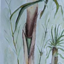 Bambusgras