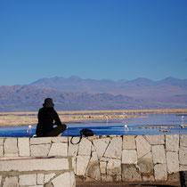 Laguna Chaxa [Atacama desert/CHILE]