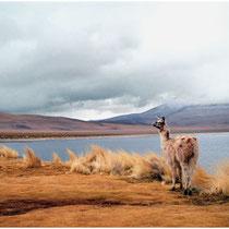 Laguna colorada Bolivie analogique