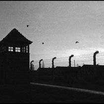 Auschwitz noir et blanc Leica