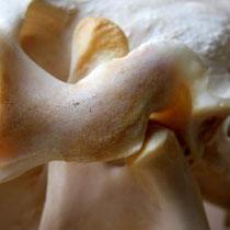 Das sensible Kiefergelenk