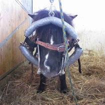 Auch Ponys benötigen eine Zahnbehandlung
