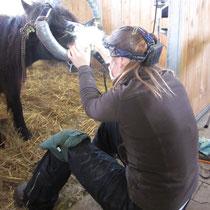 Besonderer Einsatz ist bei der Behandlung von Ponygebissen gefragt
