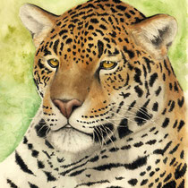 "Antonia Vogel: ""Stille Kraft"" (Jaguar, Panthera onca). 2016, Aquarell 30 x 42 cm."