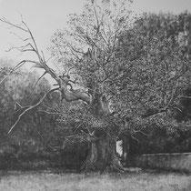 Un arbre, une commune...... ASSON (Pyrénées Atlantiques) Marronnier (environ 450 ans) Graphite et gesso sur toile 2013 100 x 100 cm