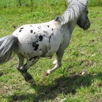 Fliegendes Pony
