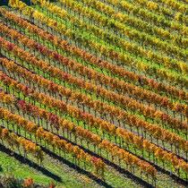 Weingärten bei Weißenkirchen, Wachau