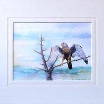 Nr.4/11 Falke   Aquarell auf Büttenspezialpapier Fin Art 50x40 cm inkl. Karton - Passepartout   € 180.-Verkauft