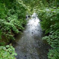 Blick auf den Fluss die Wandse