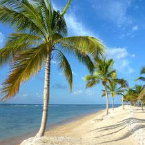 Bild: Palmenstrand