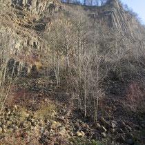 Lebensraum der Mauereidechse im Bonner Stadtgebiet (Foto: K. Weddeling)