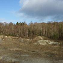 Abgrabungen sind heute der wichtigste Ersatzlebensraum für Gelbbauchunken, ursprünglich kamen sie in Flussauen vor (Bild M. Schindler).