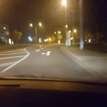 Nachts um 4 Uhr Tiere nach Bernburg zum Sammeltransport bringen