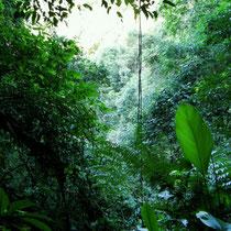 Weg zum Wasserfall+