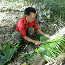 Aus einem Palmwedel entsteht ein Faecher