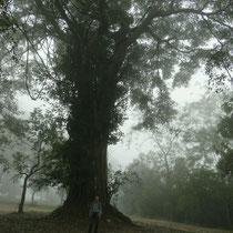 Ein riesiger Buddhatree