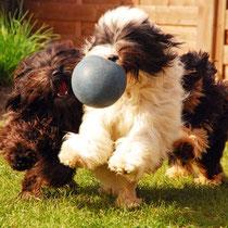 1, 2, 3, wer hat den Ball?