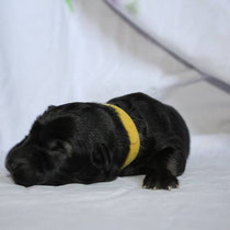 New Hati - Petite jaune