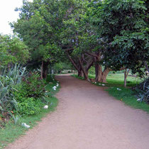 2004 - path to Baba's Samadhi ; photo taken by Sher DiMaggio
