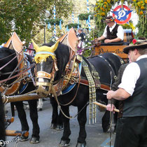 Carriges bringing beer to the Octoberfest