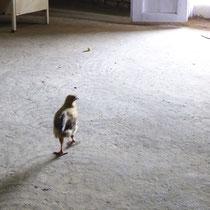 鶏が床をこするように歩く音が、逆に静寂を際立たせてくれた。