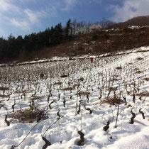 Taille et déblotage sous la neige