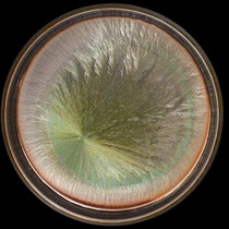BB Échantillon travaillé également en magnétisme