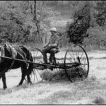 Le rateau-faneur-andainer rassemblait la récolte en roulés, prets pour le ramassage manuel à la fourche