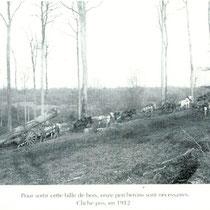 Débardage en forêt années 1900