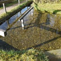 Wassertretanlage  in 82418 Seehausen am Staffelsee - unterhalb Parkplatz Gasthaus Stern - (Foto: Martina Stuprich)