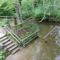 Naturtretbecken in 87637 Seeg- Waldhaus (Ostallgäu) (Foto: Tourist Info Seeg)
