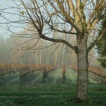 Vignoble bio du Château Méric